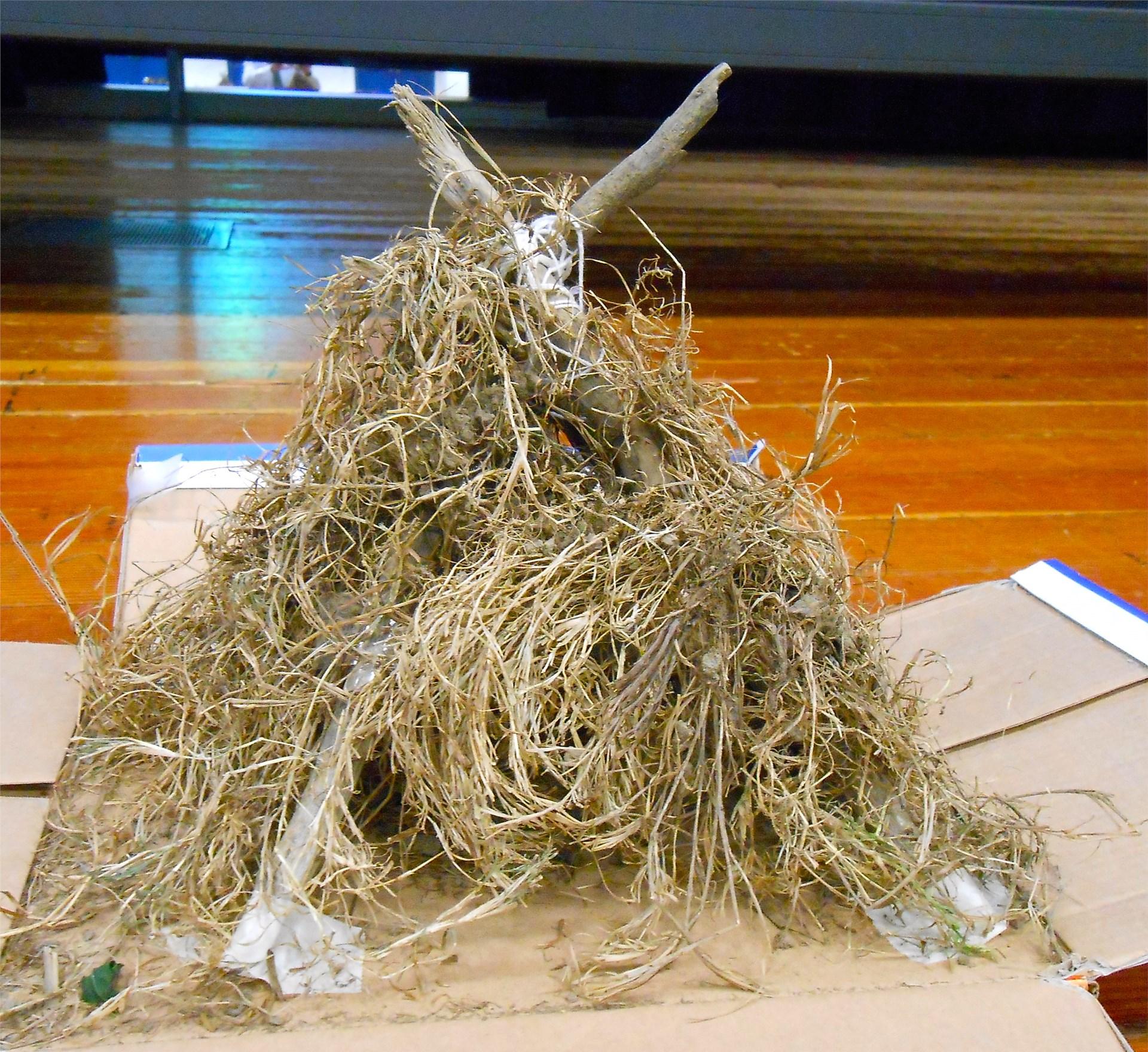 A Caddo grass house
