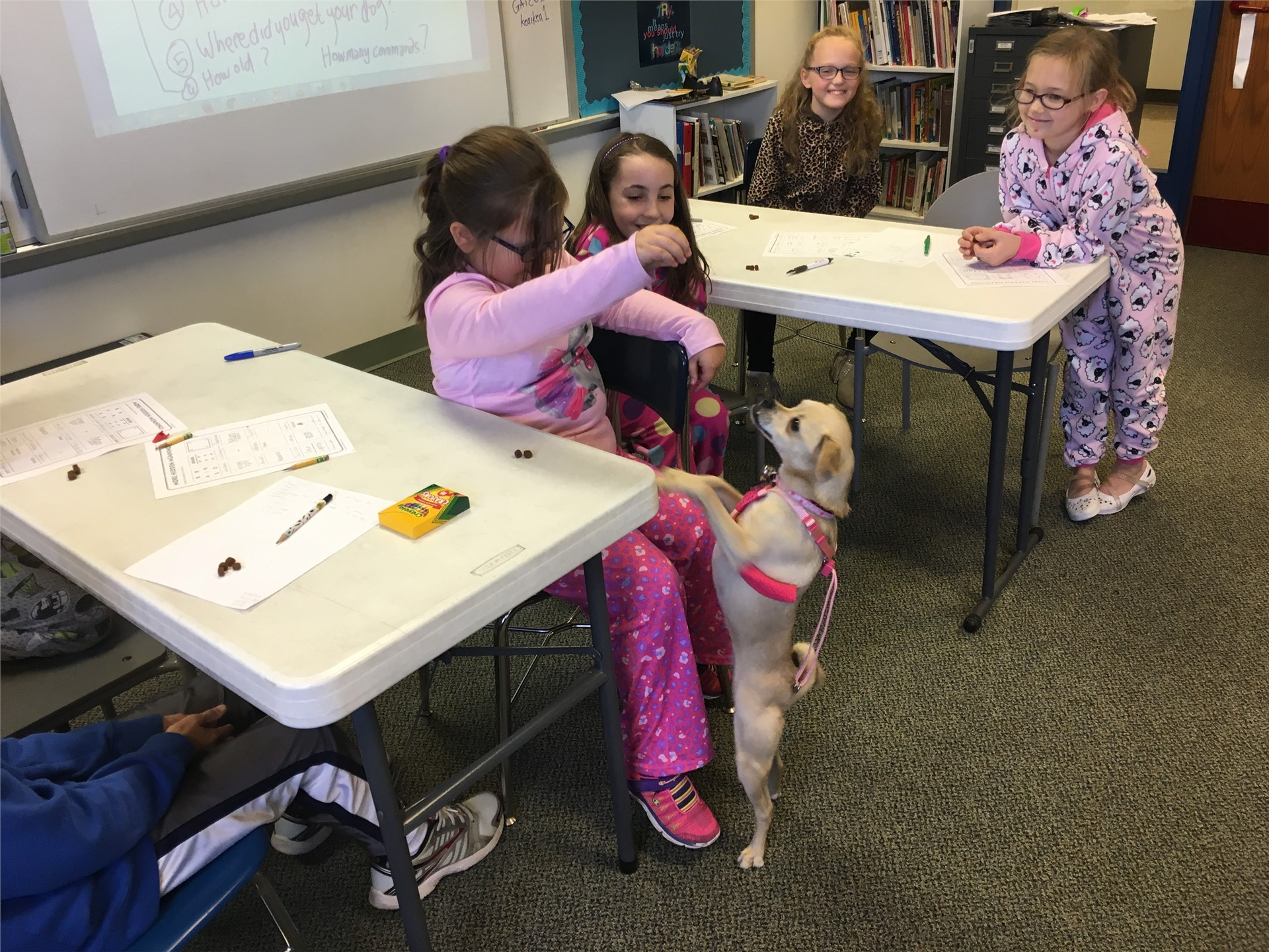 Therapy dog visits grade 3