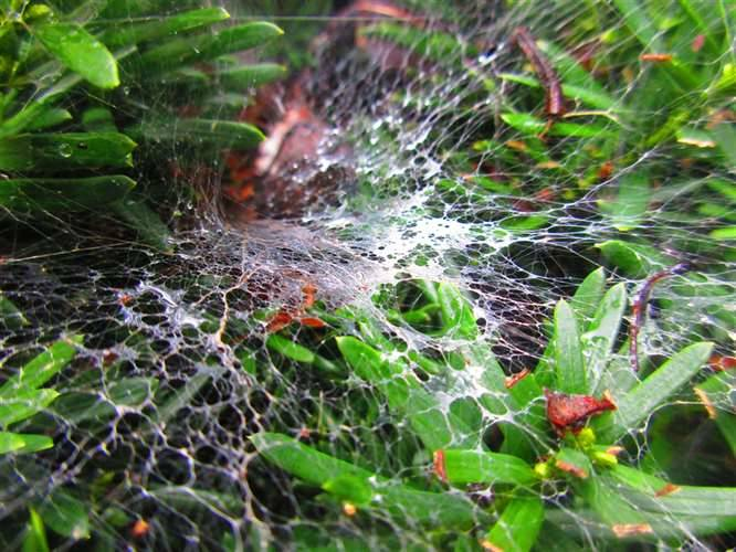 Wet Spiderweb Photograph